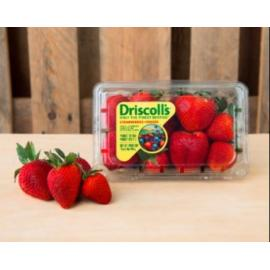 Driscoll's USA Strawberries Pack 454g