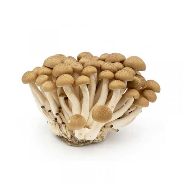Mushroom Shimenji Brown Holland Pack 150 g